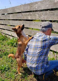 男性,家族,犬,空,動物,庭,屋外,チェック,帽子,茶色,草,長靴,塀,60代,しゃがむ,愛犬,保護犬,雑種,キャップ,おんぶ,おねだり,わんちゃん,板,自宅,ジーパン,ワンコ,チャオ,1歳4ヶ月