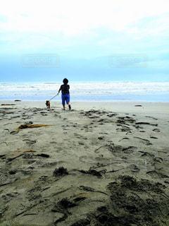 犬,自然,海,空,屋外,砂,ビーチ,後ろ姿,砂浜,散歩,水面,海岸,背中,朝,愛犬