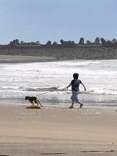 引っ張る犬の写真・画像素材[2160888]