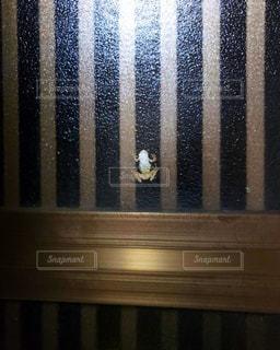 カエルのクローズアップの写真・画像素材[2190017]