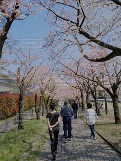 公園の小道を歩く人々のグループの写真・画像素材[2264692]