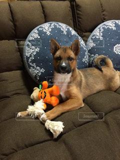 愛犬チャオの写真・画像素材[2476715]