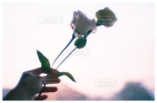 花の花瓶が窓の前で座っています。の写真・画像素材[895253]