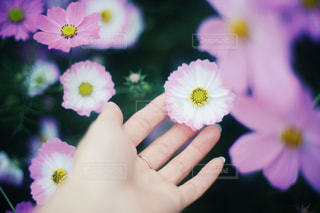 花を持っている手 - No.895255