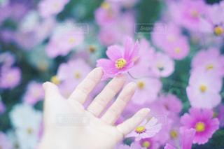 近くに花を持っている手のアップ - No.895271