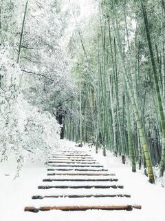 自然,森林,屋外,白,景色,樹木,ホワイト,草木