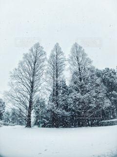 自然,雪,屋外,樹木,草木