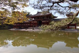 自然,屋外,京都,光,デート,平等院鳳凰堂,キレイ,10円玉