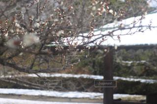 自然,花,冬,屋外,梅,枝,水面,池,鮮やか,樹木,日本,福岡城,昔,眺め,舞鶴公園,キレイ