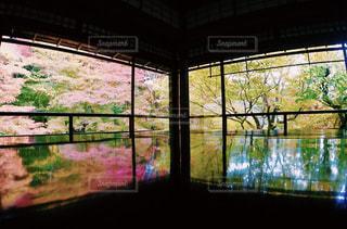 京都 瑠璃光院 紅葉の写真・画像素材[875671]