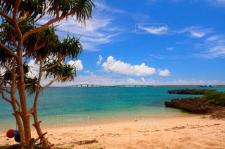ヤシの木と水の体を持つビーチの写真・画像素材[926911]