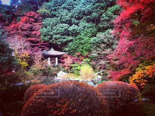 紅葉,屋外,カラフル,鮮やか,樹木,毘沙門堂
