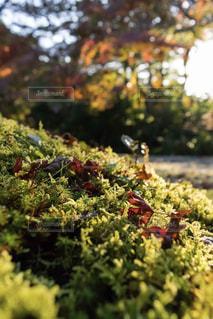夕方の秋色の写真・画像素材[876847]