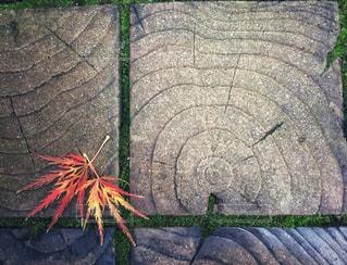 片隅の秋の写真・画像素材[885206]