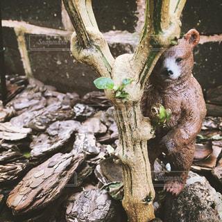 木陰のクマの写真・画像素材[891855]