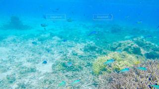 海,魚,サンゴ,青,沖縄,渡嘉敷島