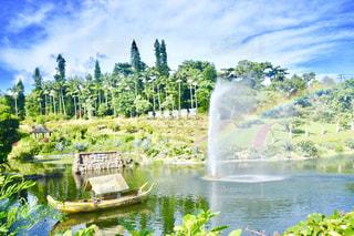 緑,植物,晴れ,青,水,虹,池,沖縄,東南植物楽園