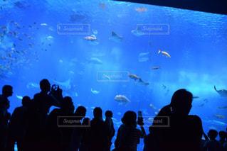 魚,青,水族館,沖縄,シルエット,人