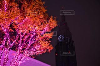 冬,夜,ピンク,イルミネーション,クリスマス,時計台
