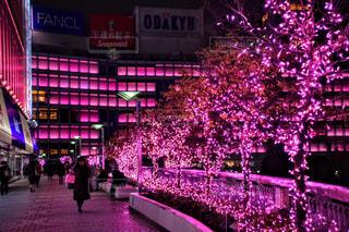 冬,夜,ピンク,イルミネーション,クリスマス