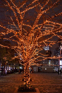 冬,夜,木,オレンジ,イルミネーション,クリスマス