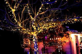 冬,夜,木,オレンジ,光,イルミネーション,クリスマス
