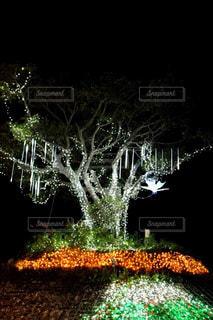 冬,夜,木,光,イルミネーション,クリスマス