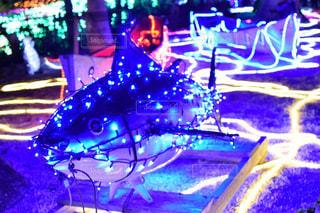夜,魚,舟,青,黄色,光,イルミネーション,クリスマス