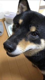 愛犬の写真・画像素材[1191379]