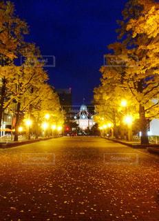 秋の散歩道札幌の写真・画像素材[880589]