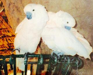 幸せを運ぶ鳥の写真・画像素材[923217]