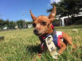草に茶色の小さな犬立っています。の写真・画像素材[744425]