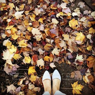 秋色の写真・画像素材[878162]