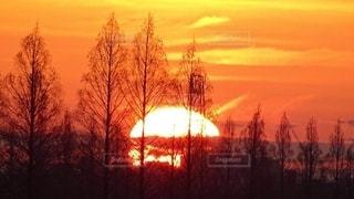 自然,空,屋外,太陽,オレンジ,光