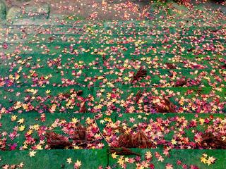 秋色の階段の写真・画像素材[890625]