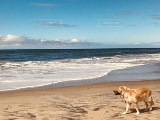 犬,海,海外,浜辺,旅行