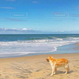 浜辺と犬の写真・画像素材[4854764]