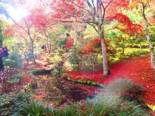 フォレスト内のツリーの写真・画像素材[884585]