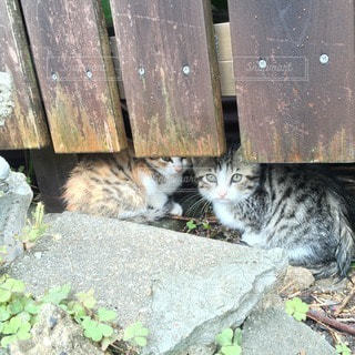 猫の写真・画像素材[57438]