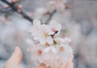 近くの花のアップの写真・画像素材[903632]