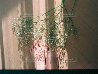 かすみ草の写真・画像素材[903640]