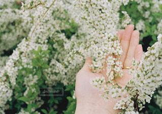 花を持っている手の写真・画像素材[903651]