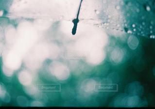 傘,緑,水滴,梅雨,フィルム写真