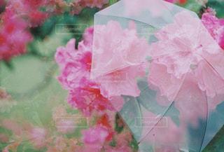 花,傘,梅雨,多重露光,フィルム写真
