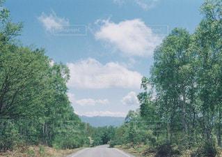 道の写真・画像素材[1432754]