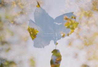 自然,秋,紅葉,多重露光,フィルム写真