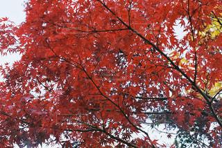 近くの木のアップの写真・画像素材[880873]