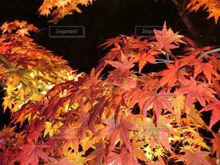 近くの木のアップ - No.880923