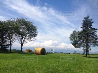 背景の木と大規模なグリーン フィールド - No.885715