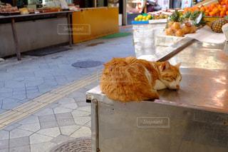 カウンターに座っている猫の写真・画像素材[896842]